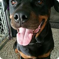 Adopt A Pet :: Tysone - Seffner, FL