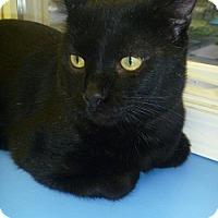 Adopt A Pet :: Coby - Hamburg, NY