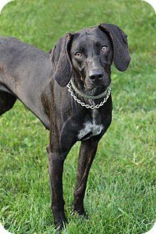 Hound (Unknown Type) Mix Dog for adoption in Manitowoc, Wisconsin - Bella