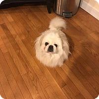 Adopt A Pet :: Diego - Portland, ME