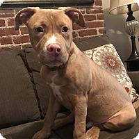 Adopt A Pet :: *ADOPTION PENDING* Tino - Parsippany, NJ