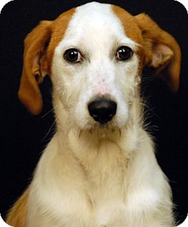 Terrier (Unknown Type, Medium) Mix Dog for adoption in Newland, North Carolina - Gypsy