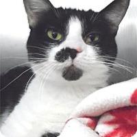Adopt A Pet :: Luci - Waupaca, WI