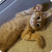 Adopt A Pet :: Pickle - McHenry, IL