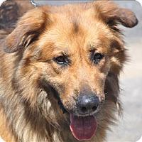 Adopt A Pet :: Benjamin - Osage Beach, MO
