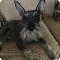 Adopt A Pet :: Clarke - Harrisonburg, VA