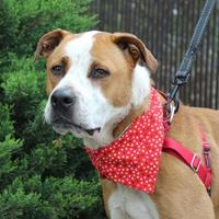 Adopt A Pet :: Bubba - Sponsored in memory  Douglas Boyd - Chico, CA