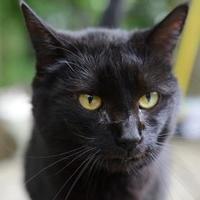 Adopt A Pet :: Jenny - New Freedom, PA