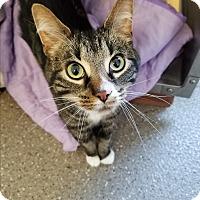 Adopt A Pet :: Kingsley - $20 adoption fee - Jamestown, MI