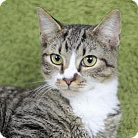 Adopt A Pet :: Annie Ash - Raleigh, NC