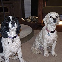 Adopt A Pet :: Lucy and Joey - Santa Barbara, CA