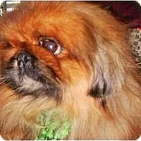 Adopt A Pet :: Toby-NY - Edmeston, NY