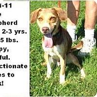 Adopt A Pet :: # 471-11 @ Animal Shelter - Zanesville, OH