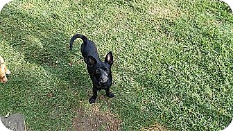 Terrier (Unknown Type, Small) Mix Dog for adoption in Gustine, California - PARKER