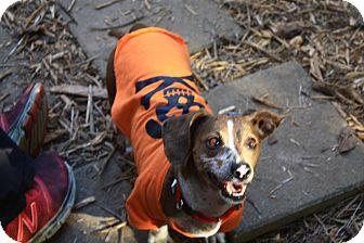 Dachshund Mix Dog for adoption in Fairmount, Georgia - Sherry