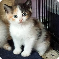 Adopt A Pet :: Marbles - Fayette City, PA