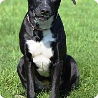 Adopt A Pet :: Emden - Pleasant Plain, OH