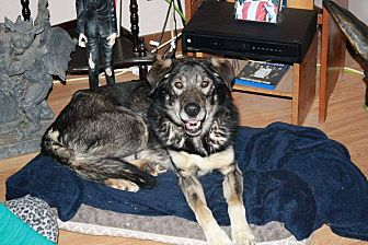 Collie/Shepherd (Unknown Type) Mix Dog for adoption in Lucknow, Ontario - TUCKER-companion dog
