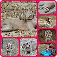 Adopt A Pet :: Schaden - Inverness, FL