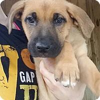 Adopt A Pet :: Rooter - Gainesville, FL