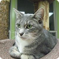 Adopt A Pet :: Sadee - Chicago, IL
