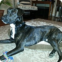 Adopt A Pet :: Sammy - Hamilton, ON