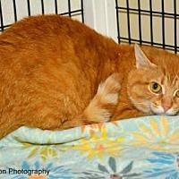 Adopt A Pet :: Octavia - Neenah, WI