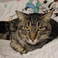 Adopt A Pet :: Buttons - Westville, IN