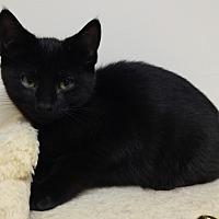 Adopt A Pet :: Hudson - Cloquet, MN