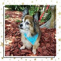 Adopt A Pet :: Sammy - Ocala, FL