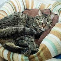 Adopt A Pet :: BECKY B - Los Angeles, CA