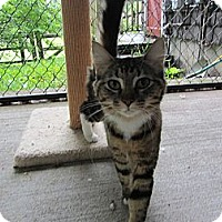 Adopt A Pet :: Athena - Kingston, WA