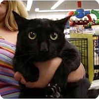 Adopt A Pet :: Nero - Jacksonville, FL