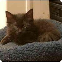 Adopt A Pet :: Mike - Davis, CA