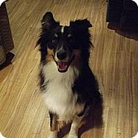 Adopt A Pet :: BANJO ASRM 0091 - Washington, IL