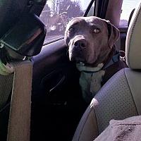 Adopt A Pet :: Zelda - Covington, TN