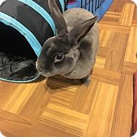 Adopt A Pet :: Steele - Hillside, NJ