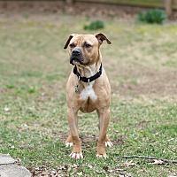 Adopt A Pet :: Phoenix - Des Peres, MO