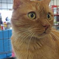 Adopt A Pet :: Elliott - Highland, IN