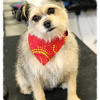 Terrier (Unknown Type, Small) Mix Dog for adoption in Los Alamitos, California - Jen