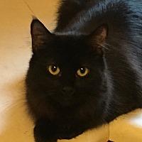 Adopt A Pet :: Mae - Covington, KY