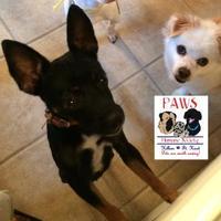 Adopt A Pet :: Willow - Killeen, TX