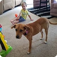 Adopt A Pet :: Blondie - Aurora, IL