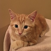 Adopt A Pet :: Doc - Garner, NC