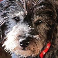 Adopt A Pet :: Rowdy - Rochester, MN