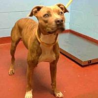 Adopt A Pet :: NIKKI - Atlanta, GA