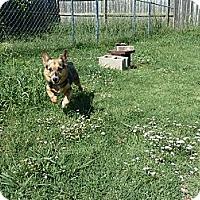 Adopt A Pet :: Brandy - Inola, OK
