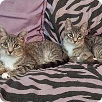 Adopt A Pet :: Daisy & Dahlia - Brooklyn, NY