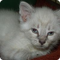 Adopt A Pet :: ELSA - Acme, PA
