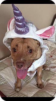 Pit Bull Terrier Mix Dog for adoption in Mt. Clemens, Michigan - Kari